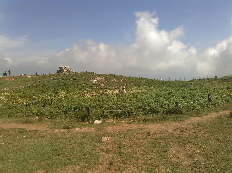 山頂のお花畑全景