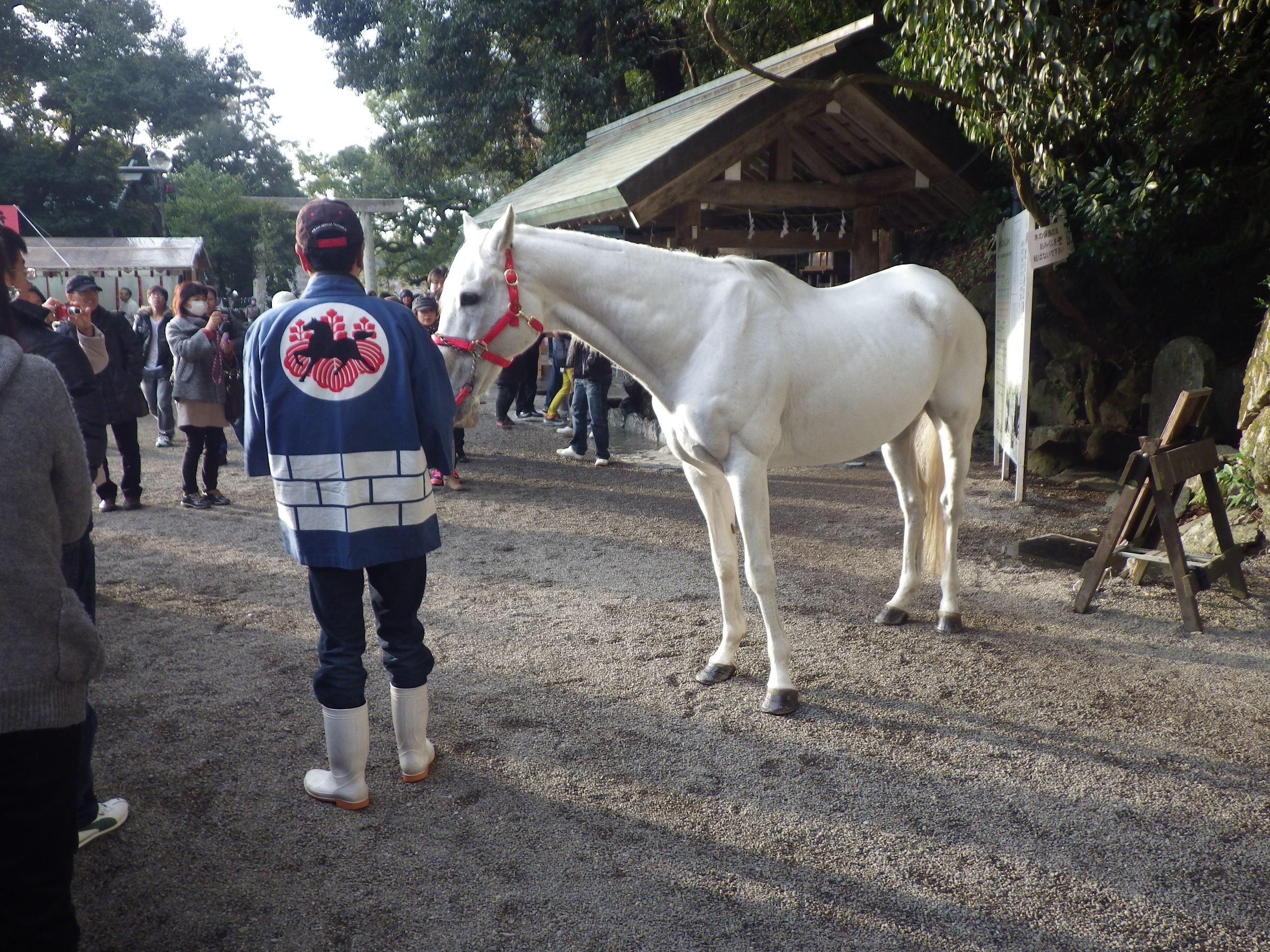 白馬にも会えました。