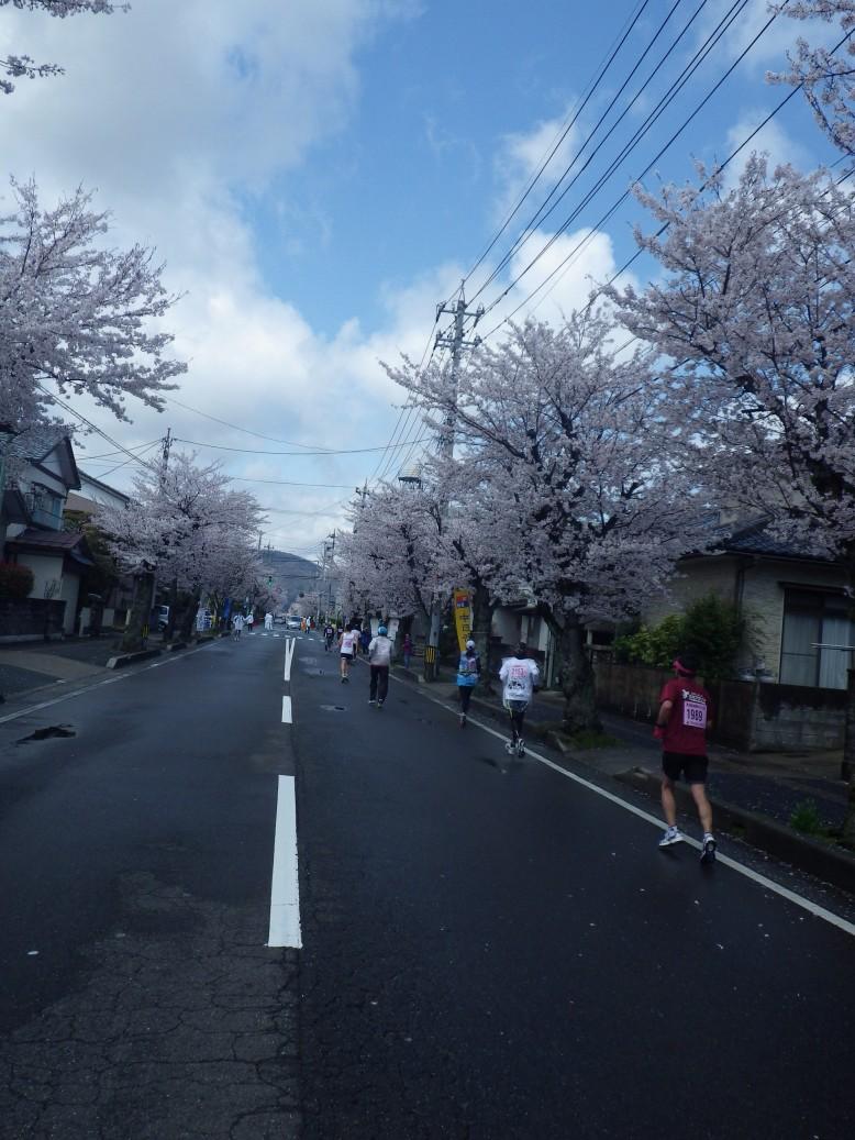 桜並木をひた走り