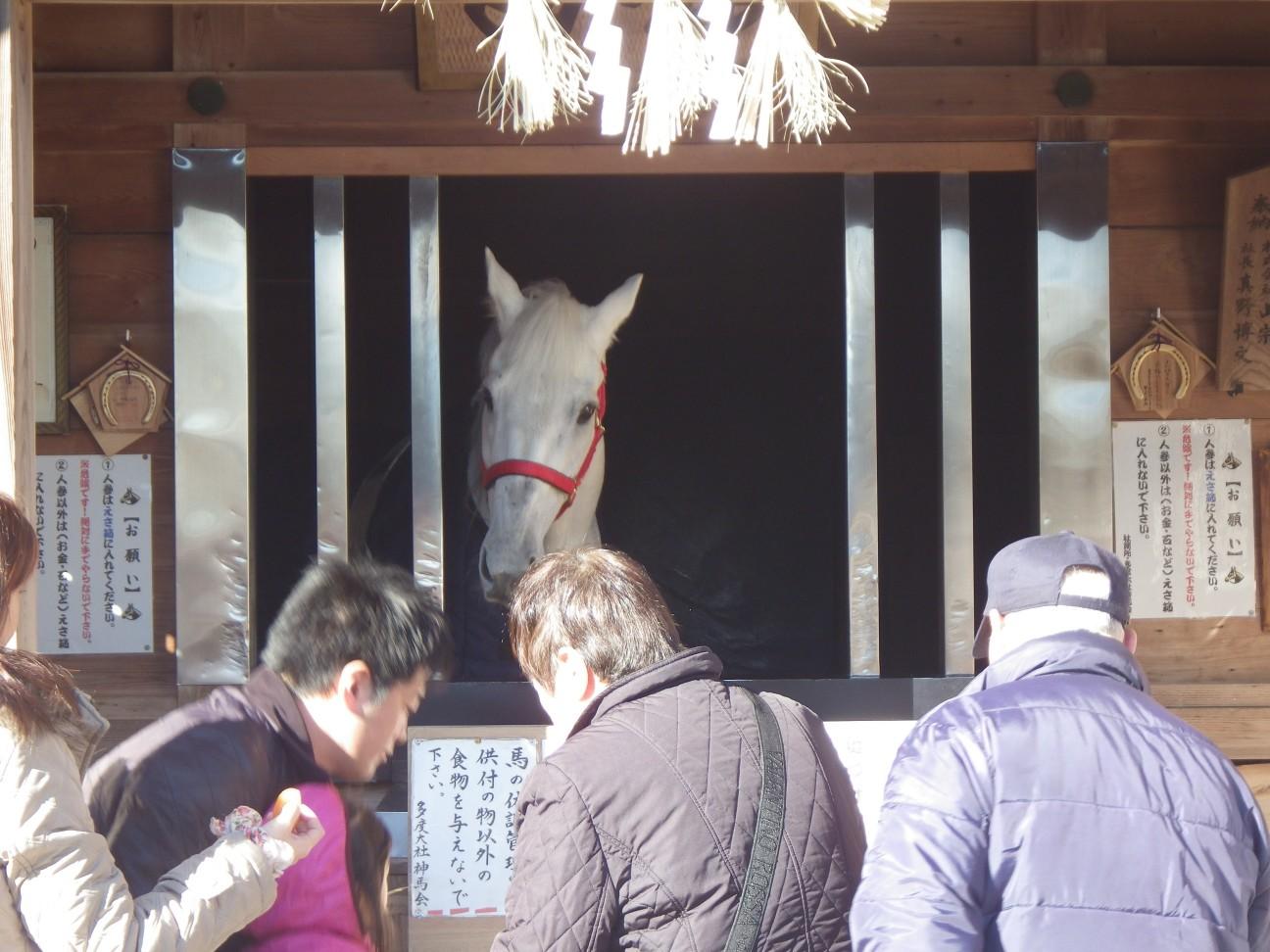 お馬さん、かわいい!